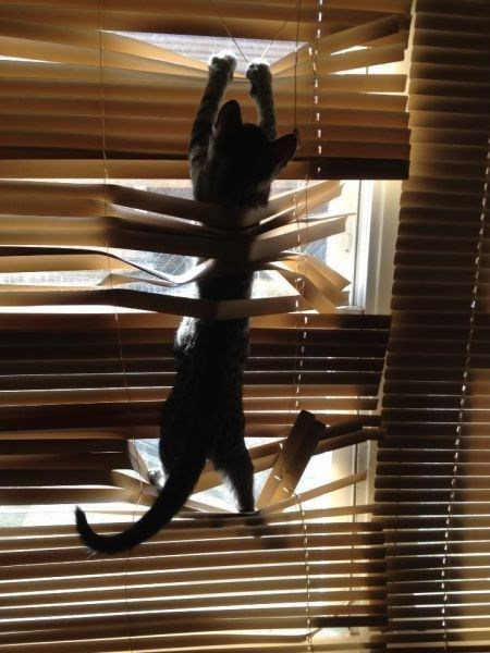 blinds,vs,fight,lolcats