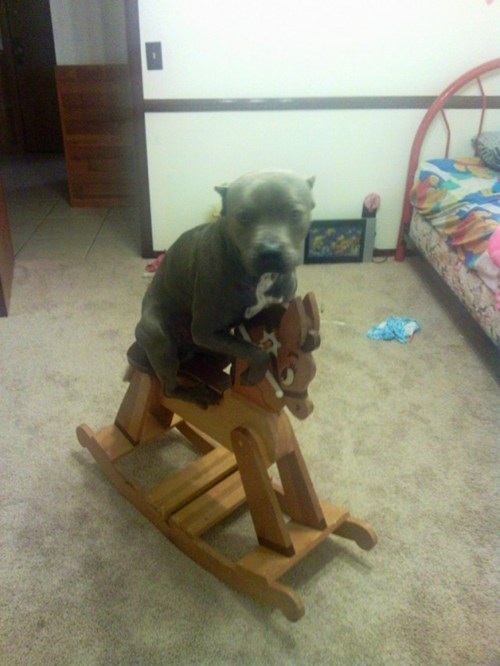 rocking horse,i has a hotdog