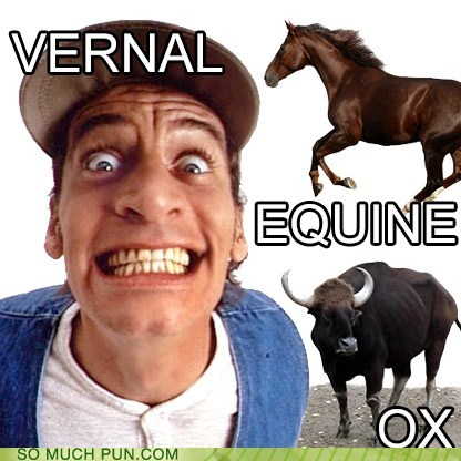 spring,vern,vernal equinox,ernest