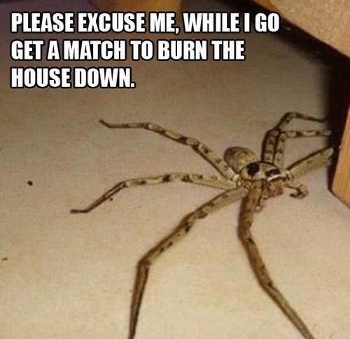 spiders,wtf,Kill It With Fire