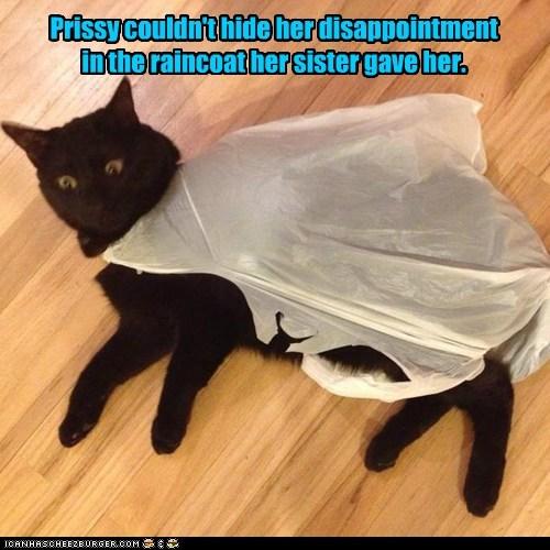Cleared Sad birthday cat