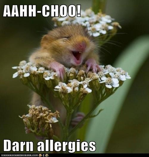spring allergies sneeze