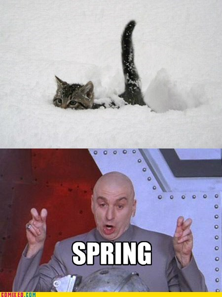 dr-evil snow weather Cats