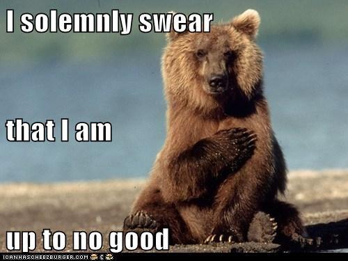 Harry Potter bear mischief - 7155377152