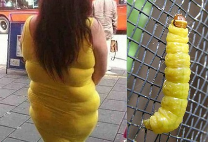 who wore it better,caterpillars,tight dresses,poorly dressed,g rated