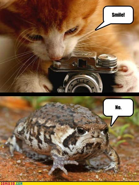 grumpy,Cats,frogs