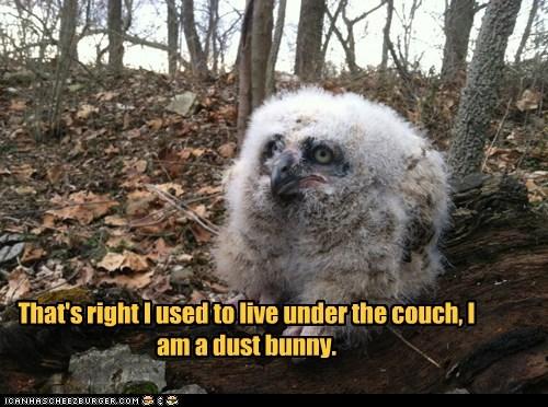 dust bunny,Owl