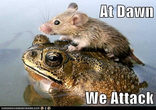 at dawn we attack,frog,mouse