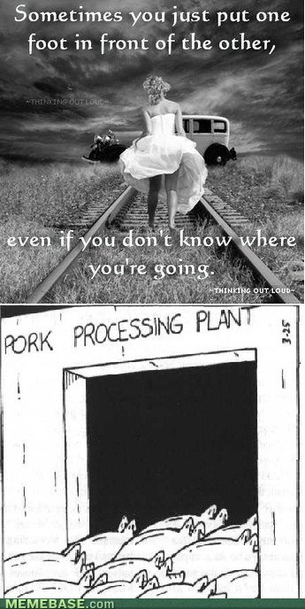 just girly things destinations sheep - 7156283648