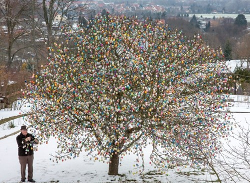 design easter eggs tree - 7156480512