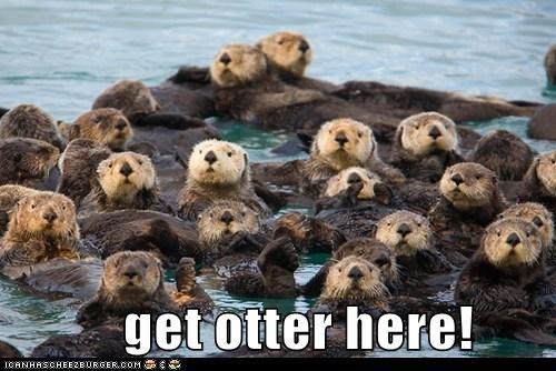 pun otters - 7157251584