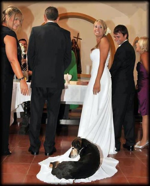 ceremonies,dogs,wedding dresses