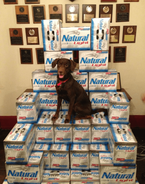 beer natty light thrones dogs - 7158518016