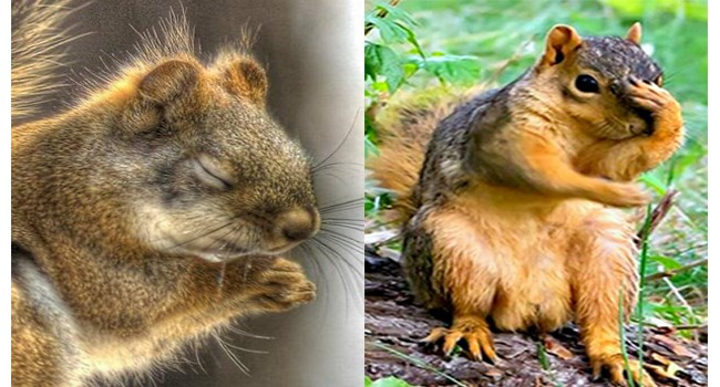 squirrels so animated in their poses that you'd think they are humans