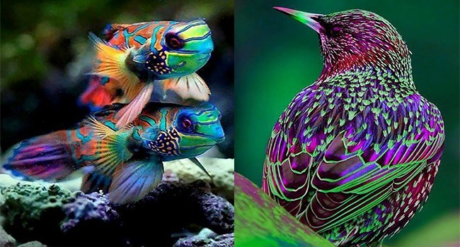 animals colorful bright vibrant neon rainbow colors bird and fish