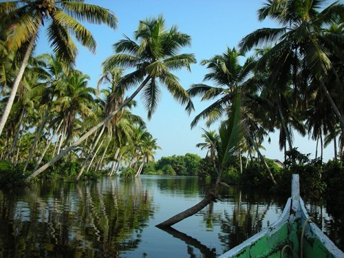 palm trees,river,india,landscape