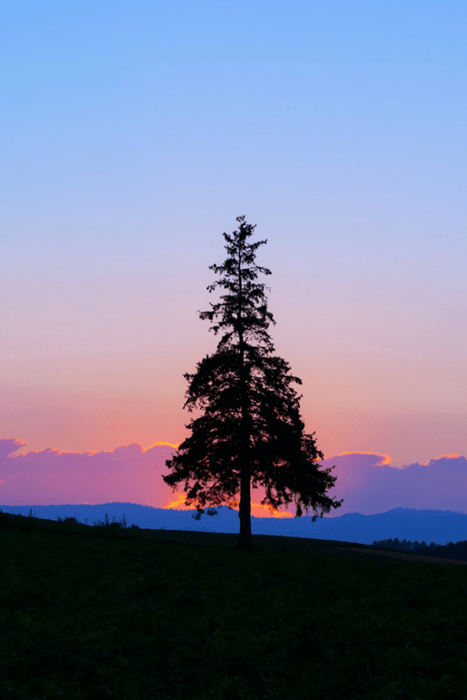 Forest landscape tree sunset