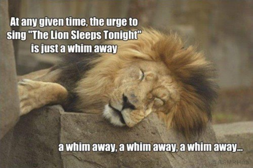 lions lyrics the tokens the lion sleeps tonight - 7159223296