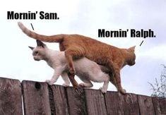 funny memes fences Memes animal memes Cats cat memes - 7159557