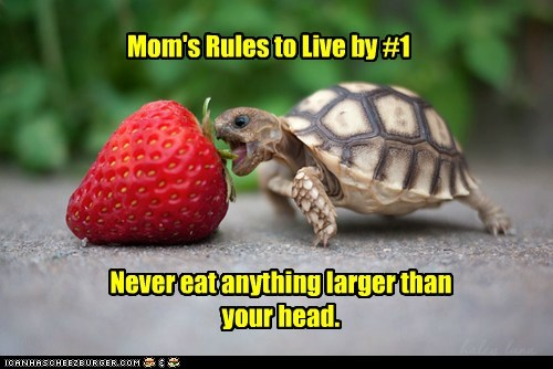 Mom's Rules to Live by #1 Never eat anything larger than your head.