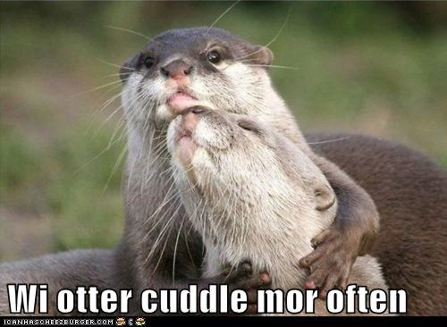 pun,cuddle,otter