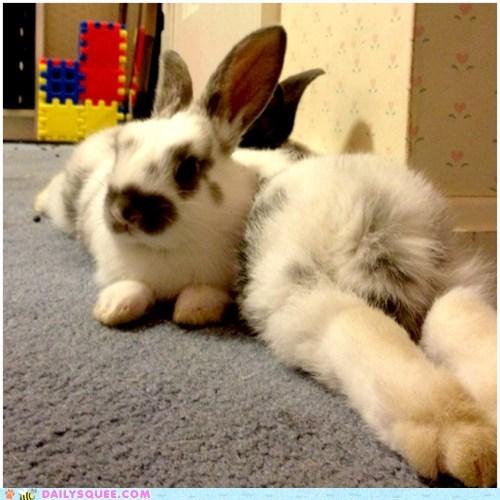 easter rabbit - 7161897216