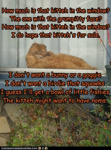 How much is that kitteh in the window? The one with the grumpitty face? How much is that kitteh in the window? I do hope that kitteh's for sale. I don't want a bunny or a goggie I don't want a birdie that squawks I guess I'll get a bowl of little fishies The kitteh might want to have noms.