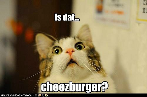 Is dat... cheezburger?