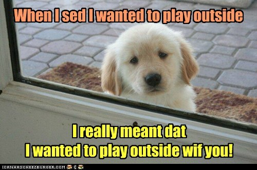 puppy,outside,play
