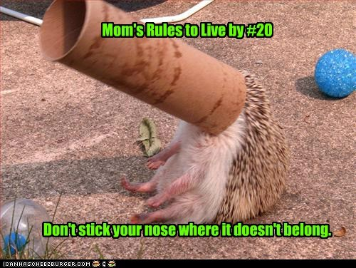 stuck,hedgehog,mom