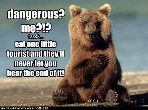 tourist,bear
