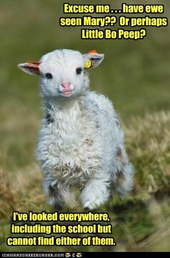 lamb mary - 7163421184