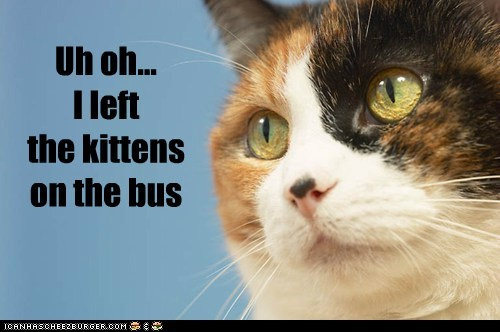 Uh oh... I left the kittens on the bus