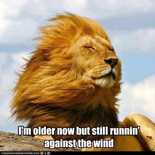 lion bob seger - 7164853248