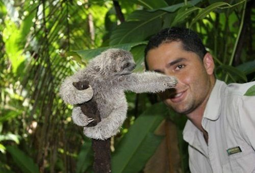 slothbombed animals sloth - 7165510912