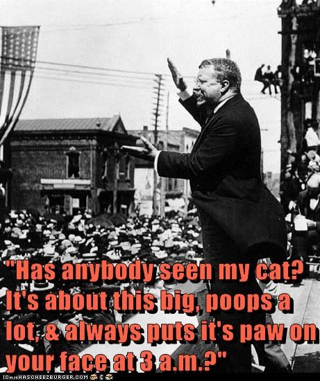 speeches teddy roosevelt Cats - 7165598464