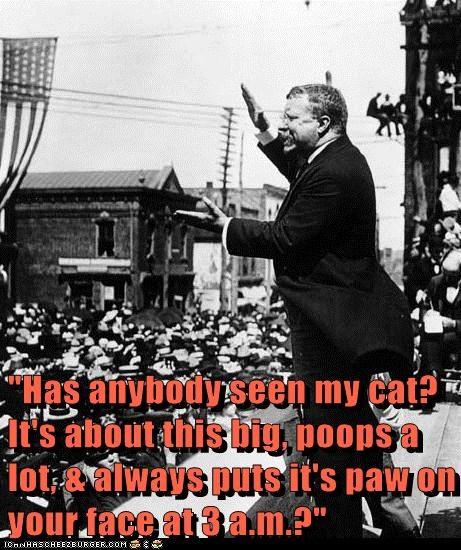 speeches teddy roosevelt Cats - 7165598464