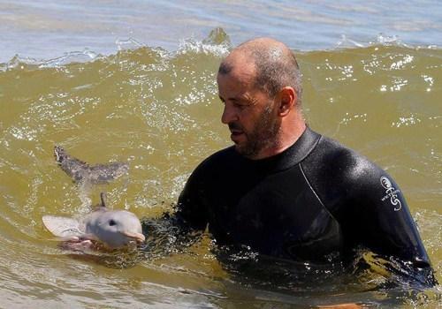 dolphin baby flipper swim - 7165709312