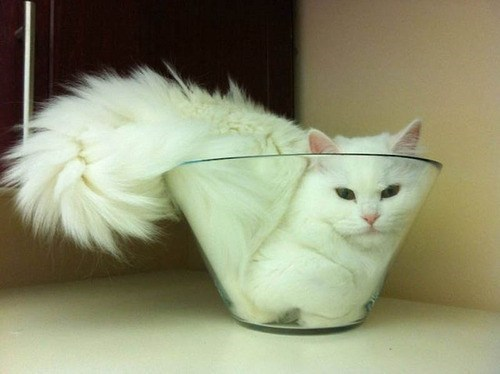 Cats Are Liquid