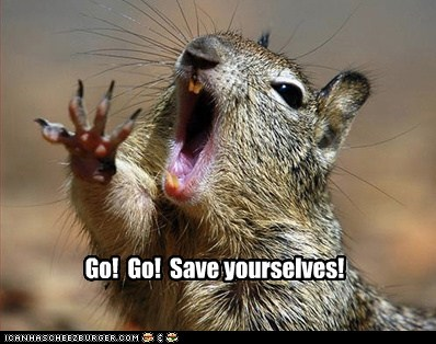 save yourself,squirrel