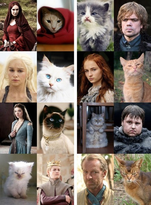 hbo Game of Thrones Cats - 7166193152
