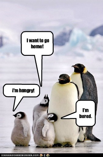 penguins,family photos