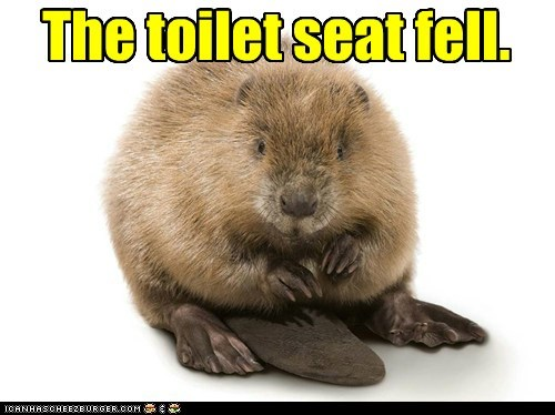 The toilet seat fell.
