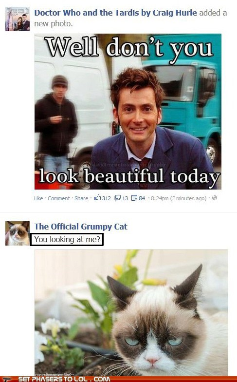 Grumpy Cat,facebook,doctor who