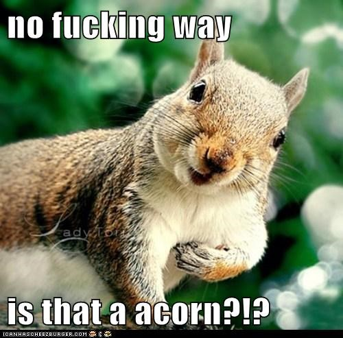 no fucking way is that a acorn?!?