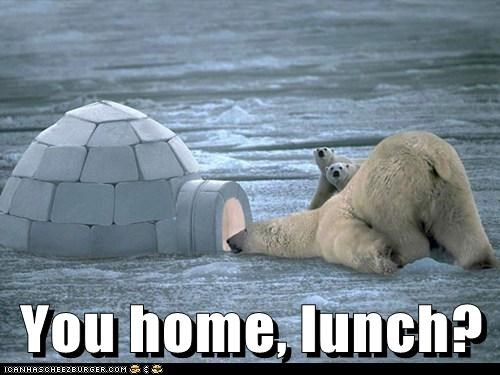 polar bear,lunch,igloo