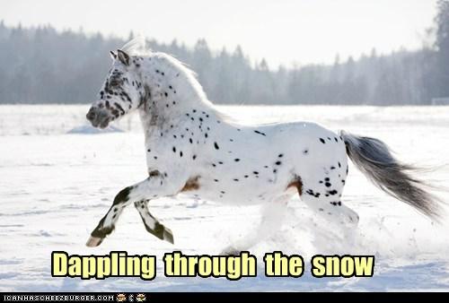 Dappling through the snow