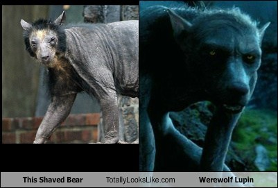 wtf werewolves bears totally looks like - 7167892480