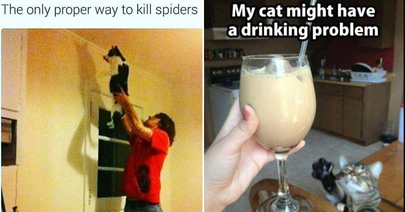 Caturday memes |cat killing a spider, cat drinking a cocktail