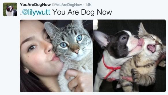 dogs twitter list cute funny - 716805